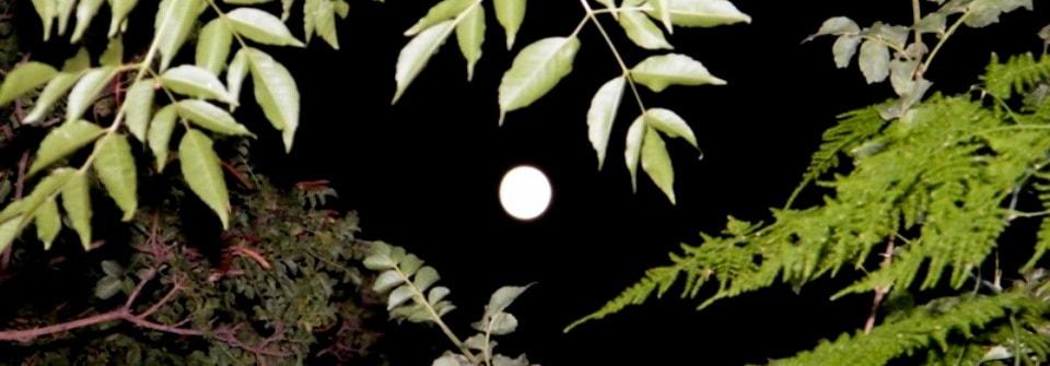 ליקוי הירח, מיניות והלוחם הרוחני